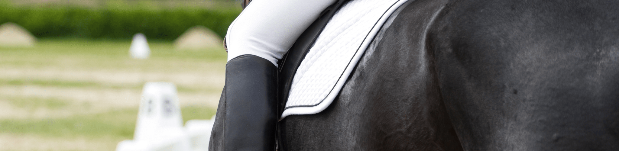 best dressage saddle pads