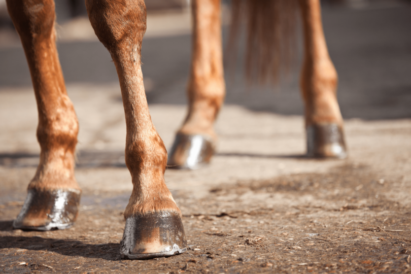 best horse ice boots
